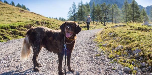 Wanderung mit Hund zur Klagenfurter Hütte