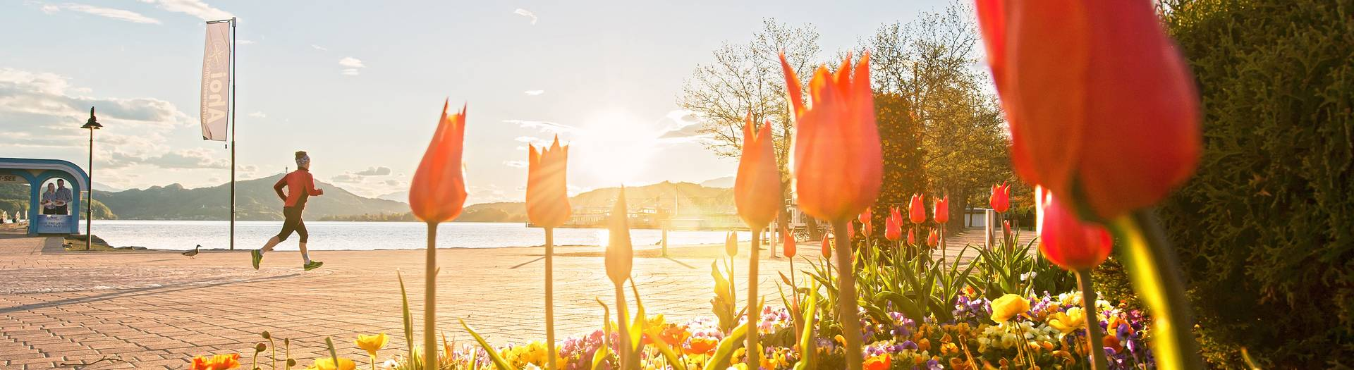 Fruehling am Woerthersee
